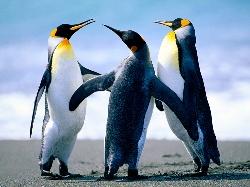 Penguins_sort.jpg